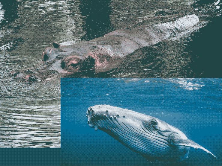 A 4-bit image of a hippo and a whale
